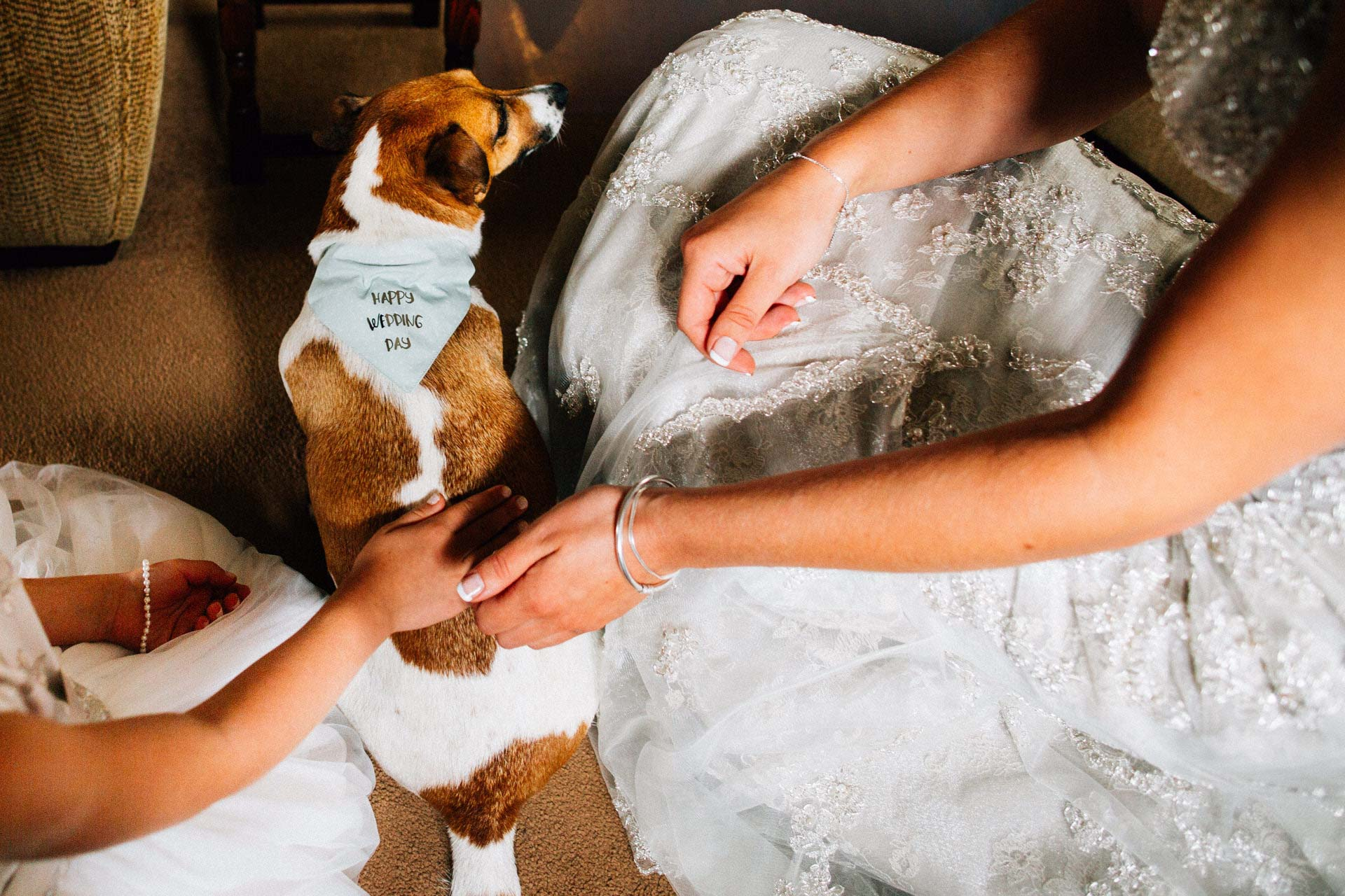Best wedding photography 2016 - dog with wedding outfit on